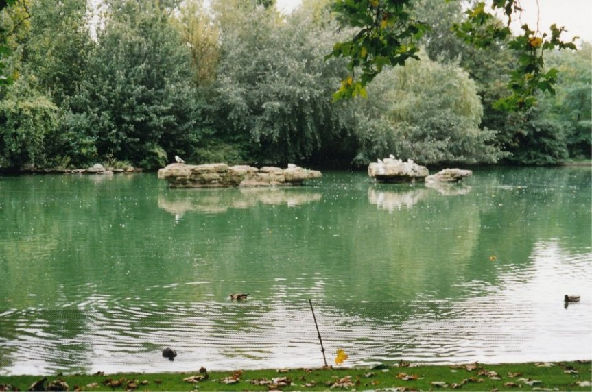 25-01 - St James Park Duck Island