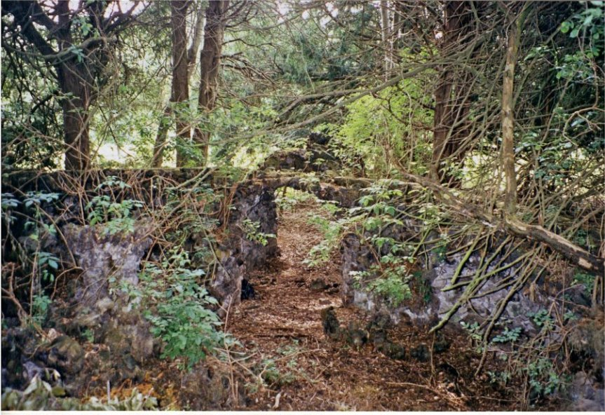 5-10-20-03 - Berry Hill Fernery 1