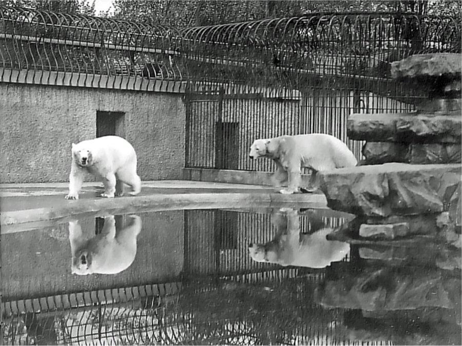 1905-13 – London Zoo, Regent's Park, London – The Pulham ...