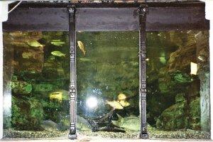 5-10-35-06 - Brighton Aquarium Tank 2005